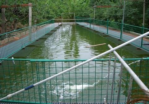 dvr allevamento ittico pesci
